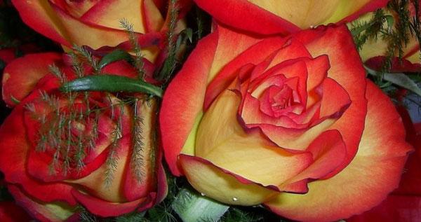 Красота из лепестков роз